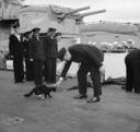 Churchill and Cat